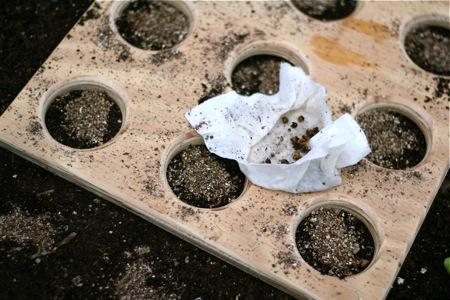 seeding-template