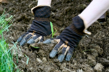 Planting_in_Ethel_Gloves