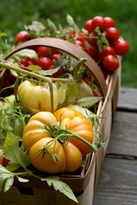 basket_of_tomatoes