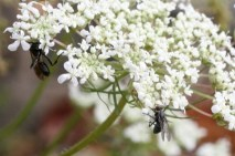 Insects_on_flower_2
