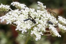 insects_on_flower_3