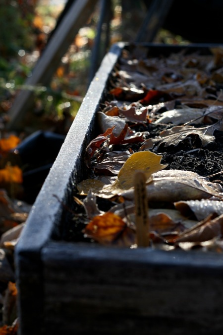 frost_on_raised_bed