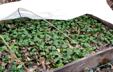 building small garden hoop houses out of electrical conduit