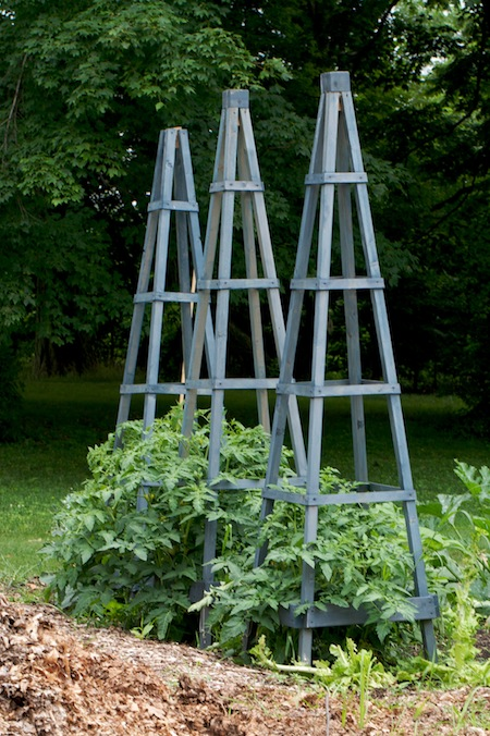 Structural elements arbors trellises and pergolas for Structural plants for small gardens