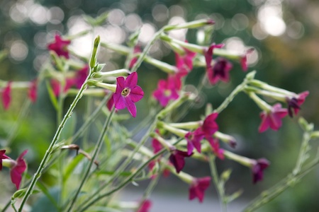 When should hummingbird feeders be taken down in winter?