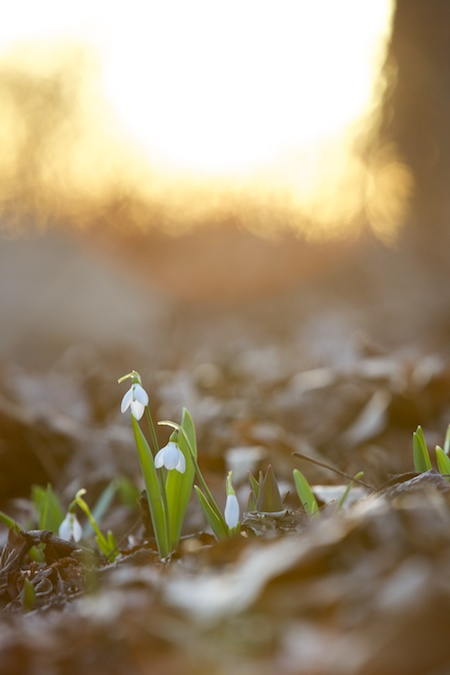 the first spring blooms 5