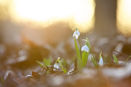 flowering bulbs 1