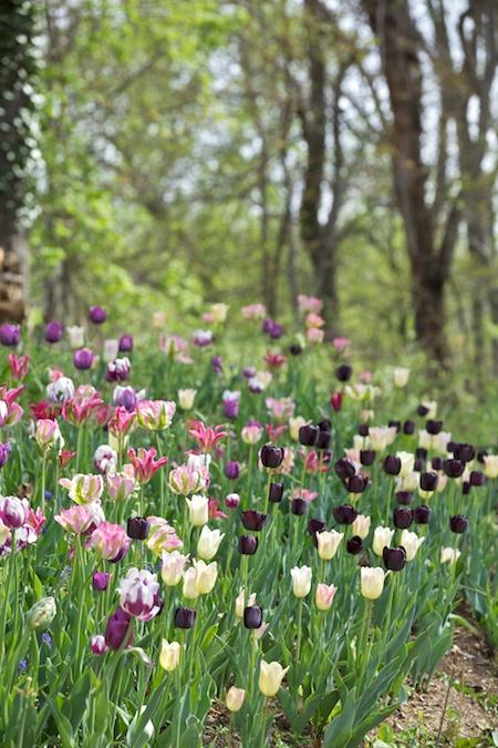 flowering bulbs 5