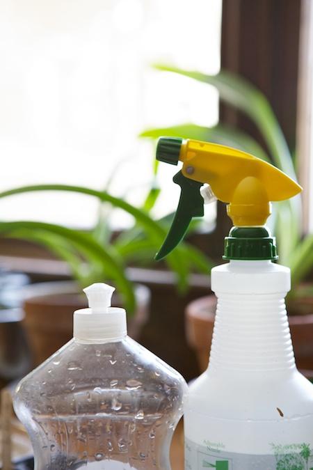 watering seedlings 1