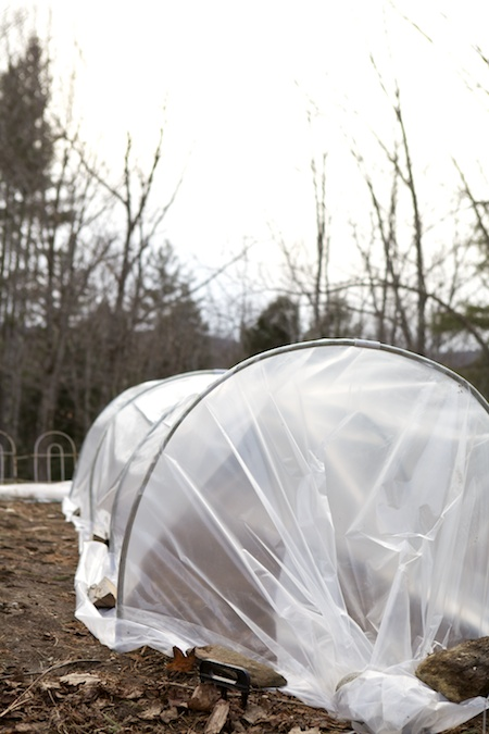 Low Tunnel Greenhouse 2