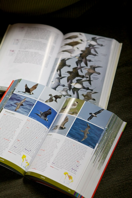 bird books 4