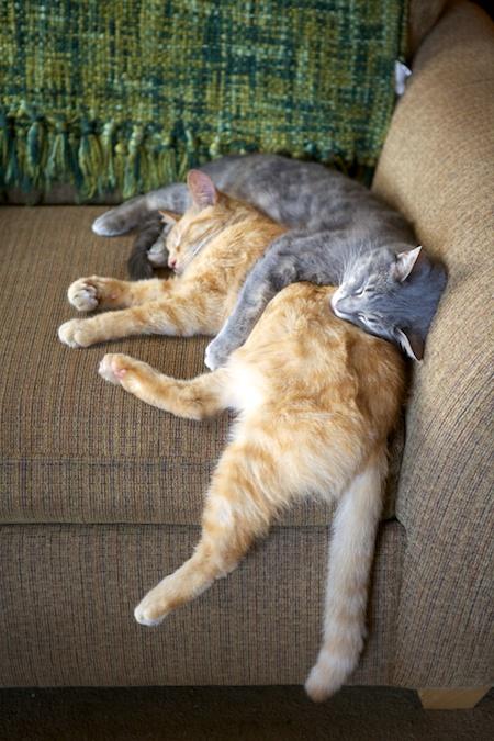 Cats sleeping 1