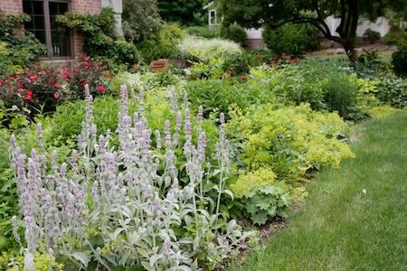 Gingers Garden 5