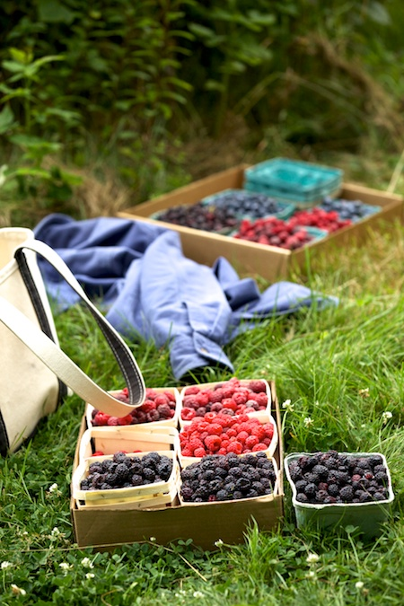 Berry Picking 8