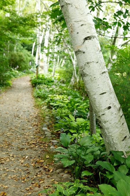 Augsta Gardens 8