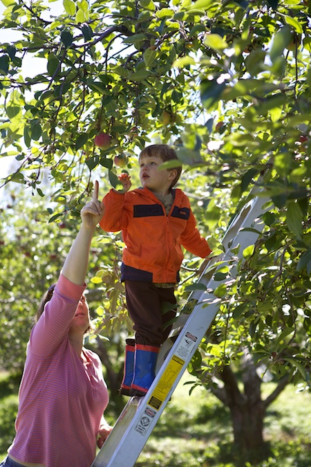 apple picking 6
