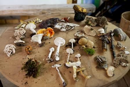 mushroom class 3
