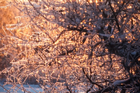 Sunny winter morning 2