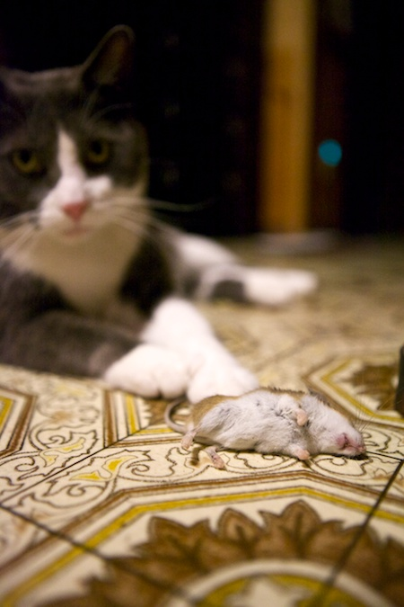Dexter and his mouse