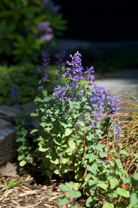 belfast garden tour 2 19