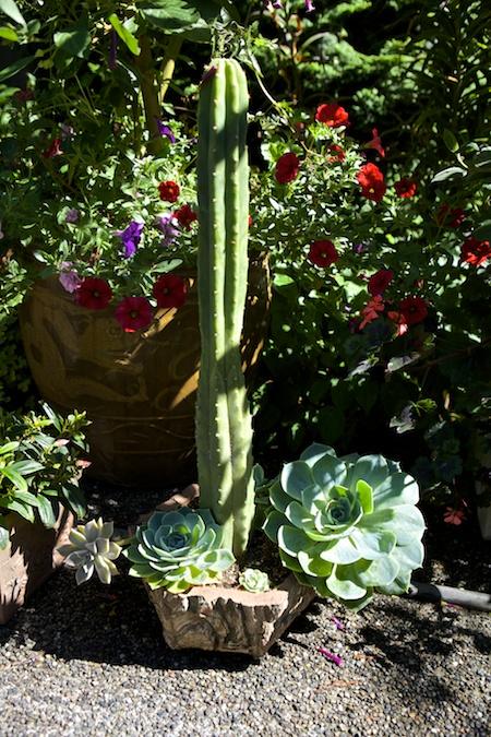 dunn garden containers 1 (1)