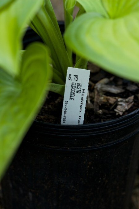 new plants from hidden gardens 8