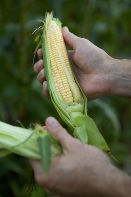 first sweet corn