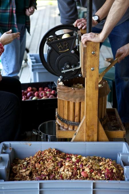 making cider 10