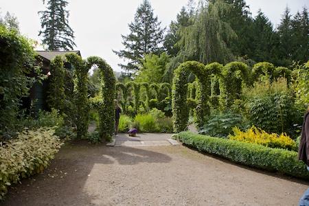 Herronswood hedge garden 2