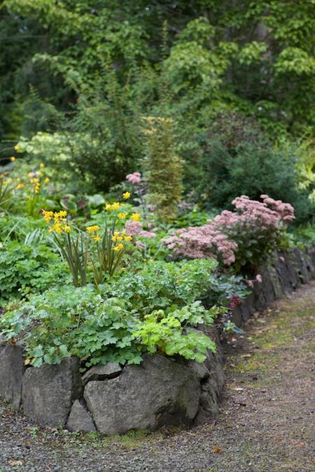 herons wood plants 1