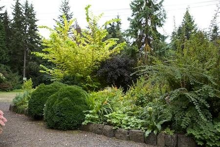 herons wood plants 11