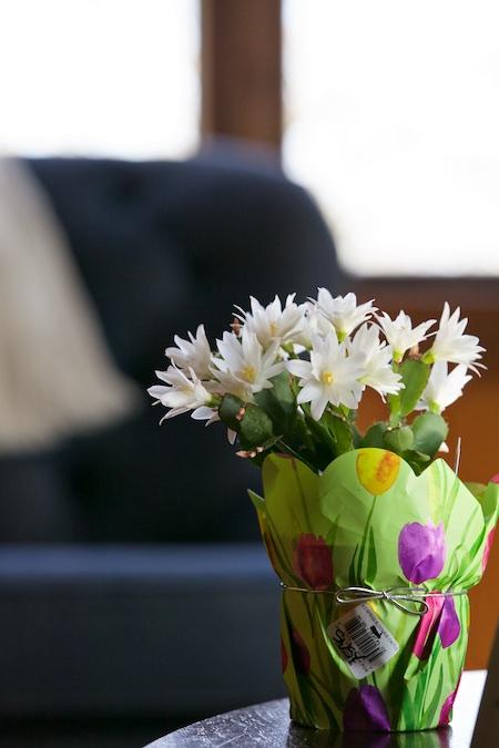 spring cactus 2