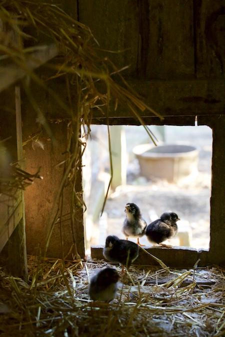 baby birds 1
