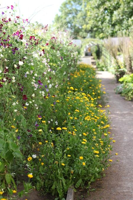 lacko-slatt-upper-garden-19