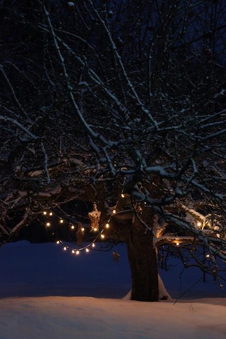 lights-on-apple-tree-2