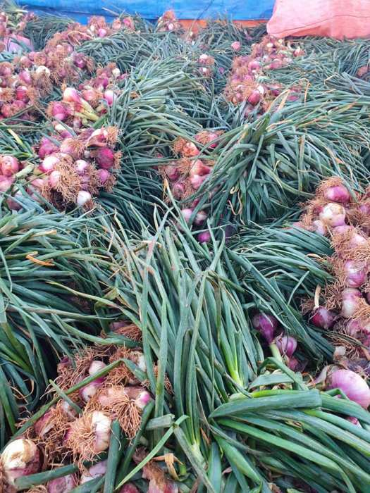 Bolivian red onions