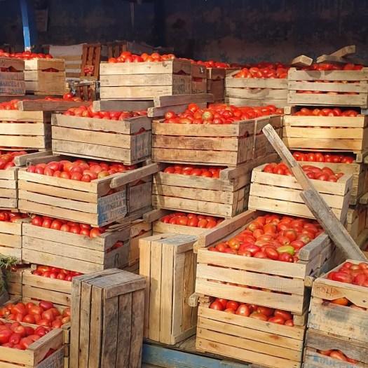 Bolivian tomatoes
