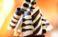 Disney Food Confession - Zebra Cupcake