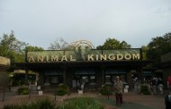 What's New and Next at Disney's Animal Kingdom?