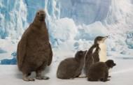 SeaWorld Orlando Celebrates National Penguin Awareness Day with 15 Penguin Chicks