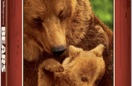 Review of Disneynature BEARS on Blu-ray, DVD, and Digital HD
