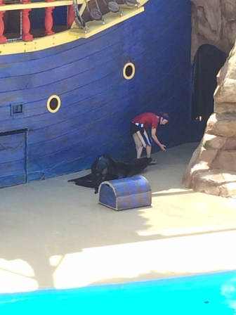 Being a sneaky Sea Lion