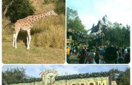 Top Animal Kingdom Attractions For First Timers