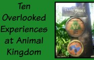 Ten Overlooked Experiences at Animal Kingdom