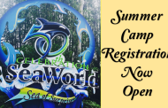 SeaWorld Camps Make a Splash this Summer