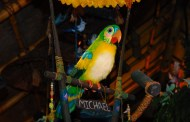 Food and Drink now Allowed in the Enchanted Tiki Room