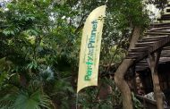 Disney's Animal Kingdom Party for the Planet Celebration Review