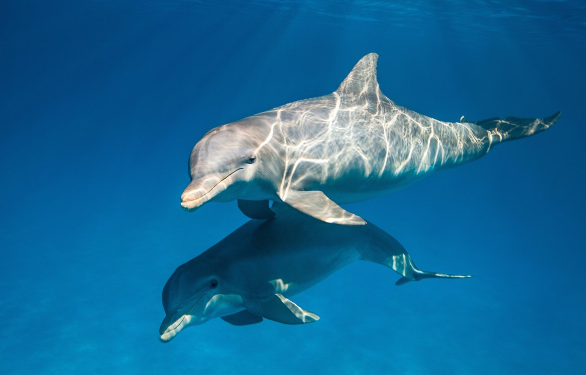 """DisneyNature heads under the Sea with all new trailer for """"Dolphins"""""""