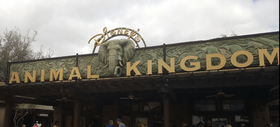 Celebrate 20 Years of Animal Kingdom with These New Wild Adventures!