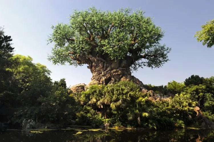 A Look Back At 20 Years of Amazing Animal Kingdom Milestones